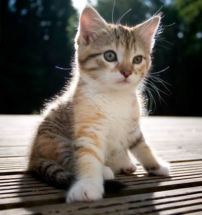 kitten_rescue_6
