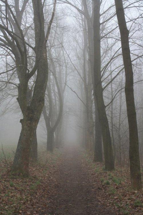 Misty_Morning_8_by_pelleron_stock